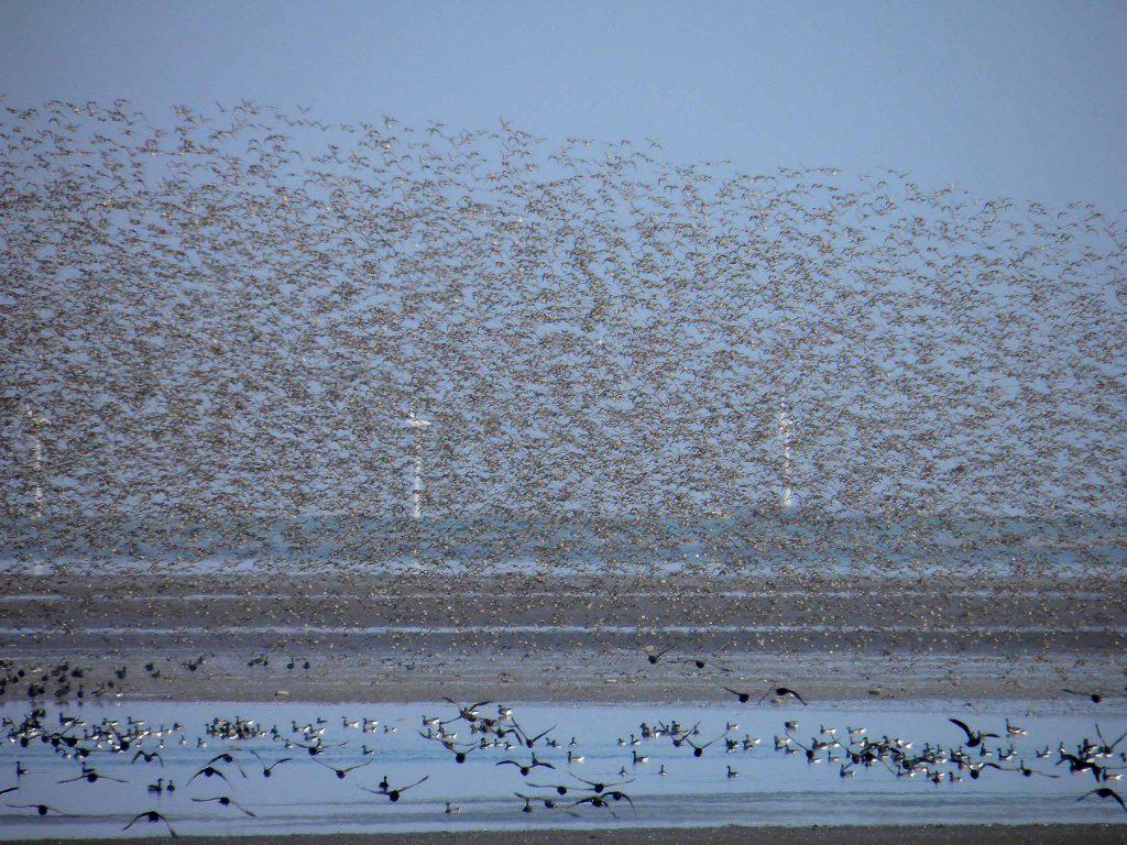 Arktischer Vogelzug